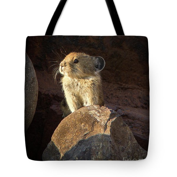The Coast Is Clear Wildlife Photography By Kaylyn Franks Tote Bag