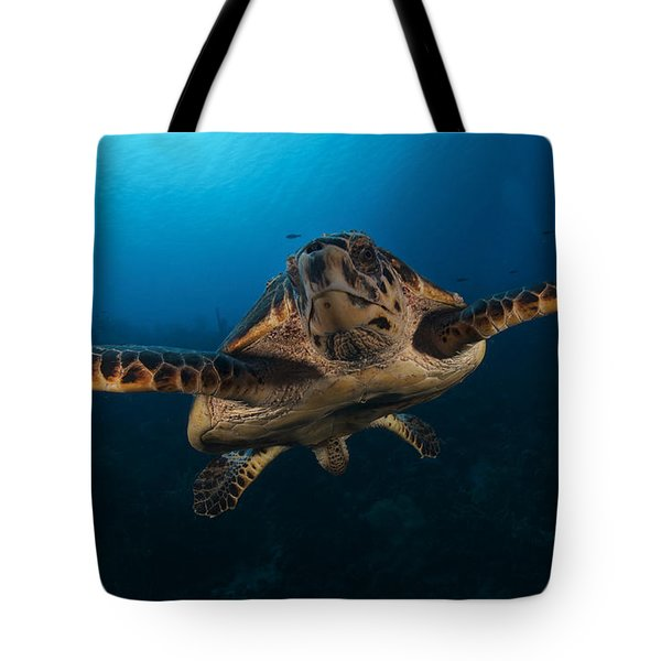The Hawksbill Sea Turtle, Bonaire Tote Bag by Terry Moore