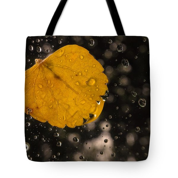 This One Followed Me Home... Tote Bag