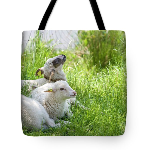 Tote Bag featuring the photograph Three Little Lambs by Patricia Hofmeester