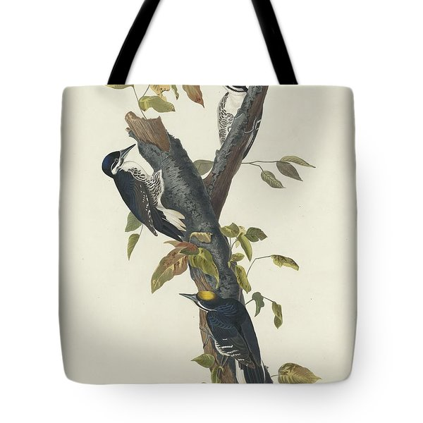 Three-toed Woodpecker Tote Bag