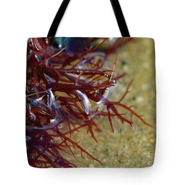 Tidepool Seaweed Tote Bag