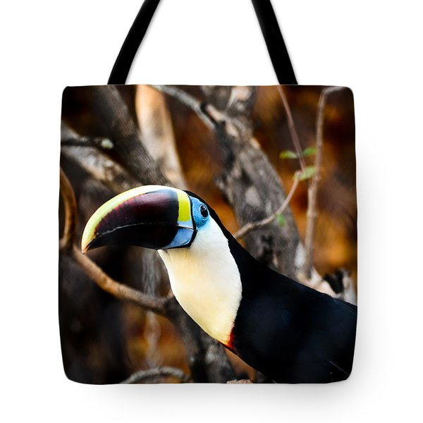 Toucan Tote Bag by Daniel Precht