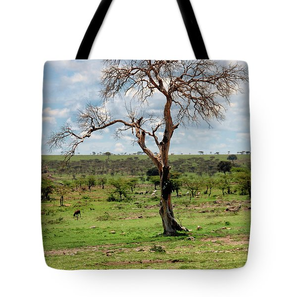 Tote Bag featuring the photograph Tree by Charuhas Images