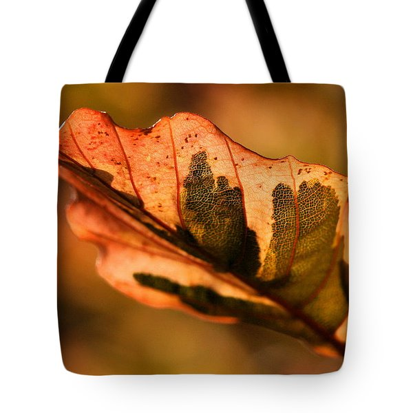 Tote Bag featuring the photograph Tri-color Beech In Autumn by Angela Rath