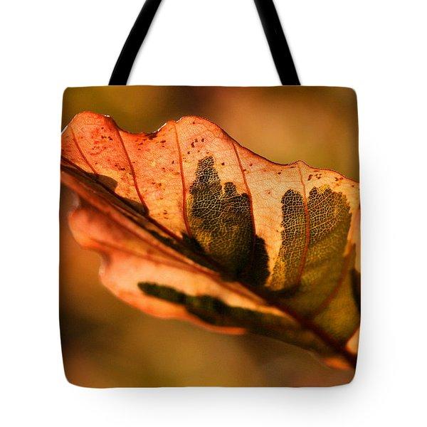 Tri-color Beech In Autumn Tote Bag