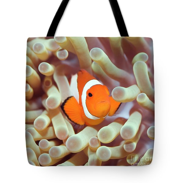 Tropical Fish Clownfish Tote Bag by MotHaiBaPhoto Prints