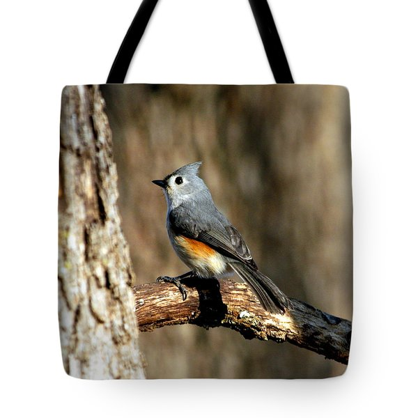 Tufted Titmouse On Branch Tote Bag by Sheila Brown