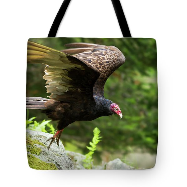 Tote Bag featuring the photograph Turkey Vulture by Mircea Costina Photography