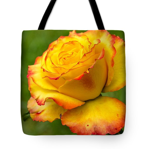 Two Toned Rose  Tote Bag by Martina Fagan