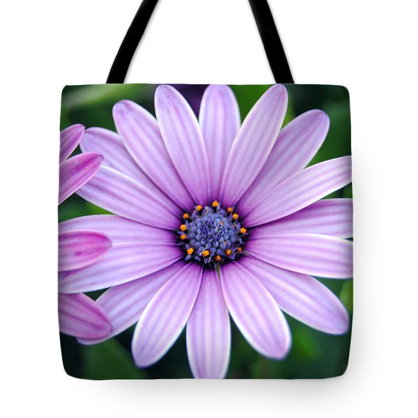 The African Daisy 3 Tote Bag