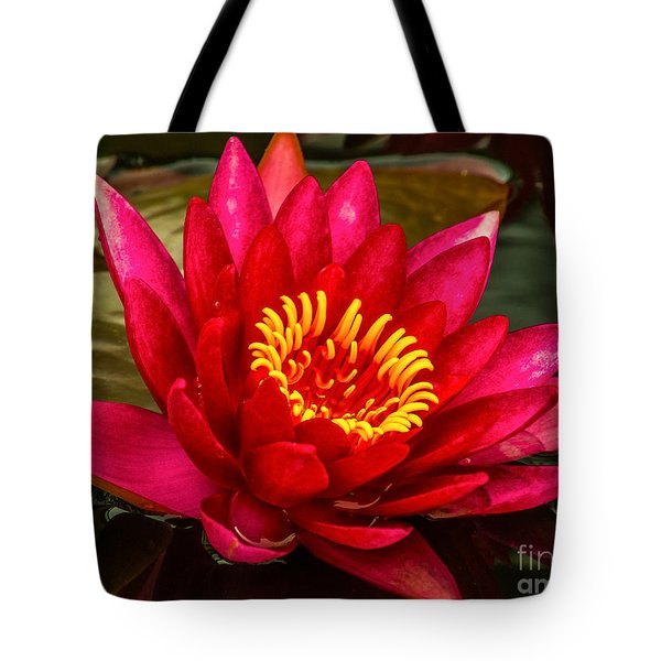 Water Lily 15-6 Tote Bag