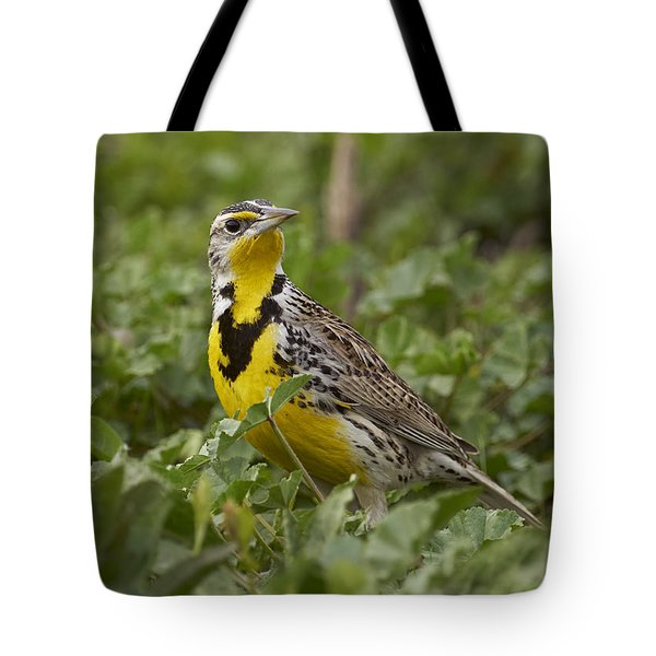 Western Meadowlark Tote Bag by Doug Herr