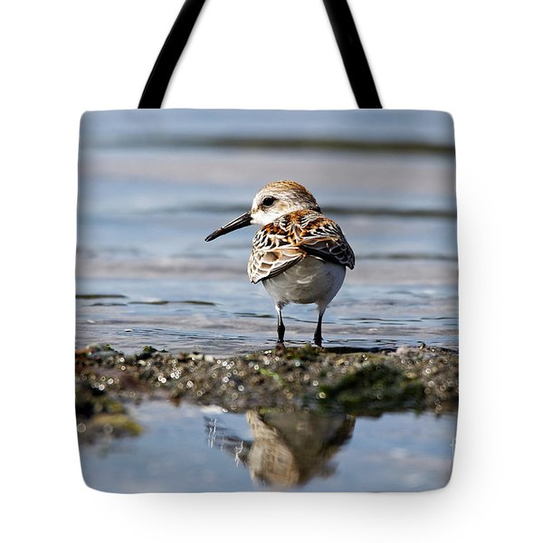 Tote Bag featuring the photograph Western Sandpiper by Sue Harper