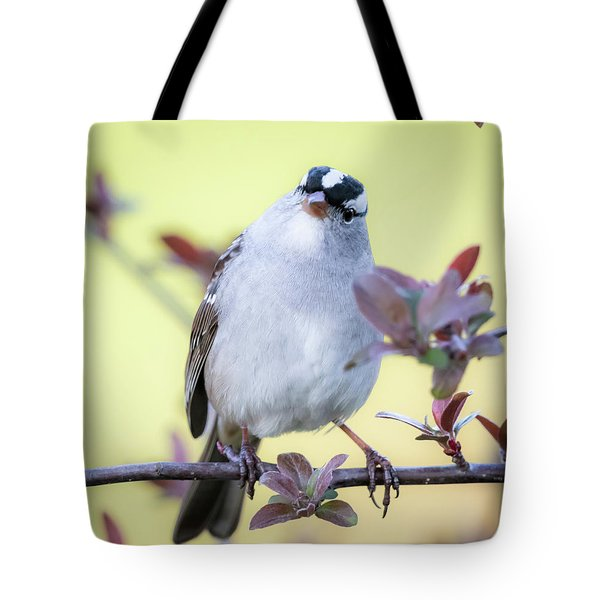 Tote Bag featuring the photograph White-crowned Sparrow  by Ricky L Jones