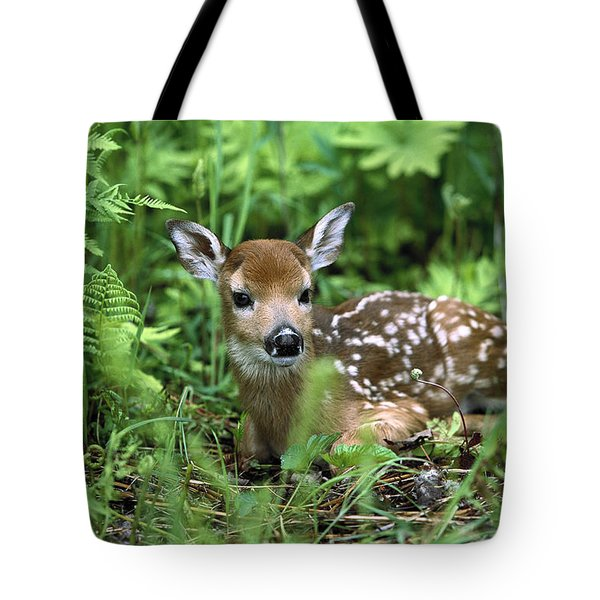 Tote Bag featuring the photograph White-tailed Deer Odocoileus by Konrad Wothe