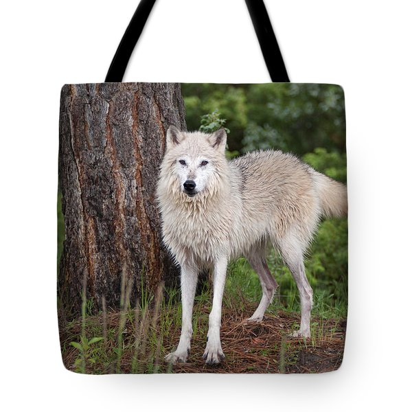 White Wolf. Tote Bag