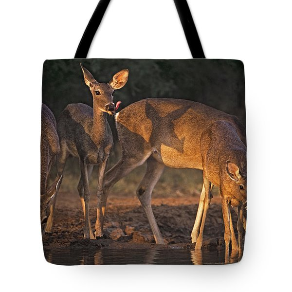 Tote Bag featuring the photograph Whitetail Deer At Waterhole Texas by Dave Welling