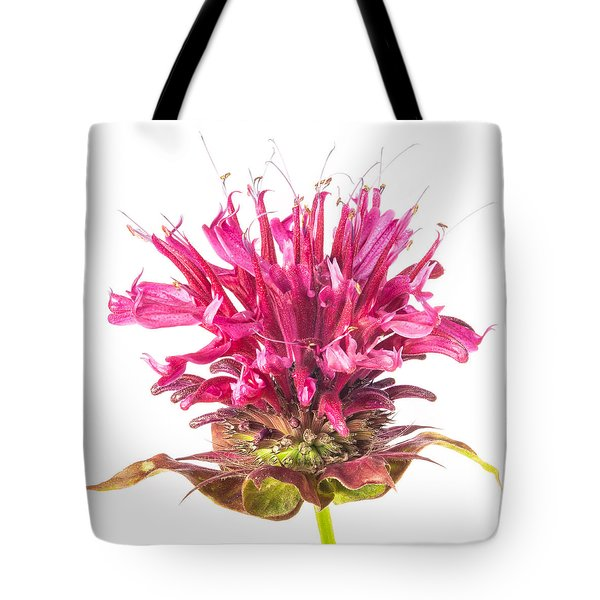 Wild Bergamot Also Known As Bee Balm Tote Bag