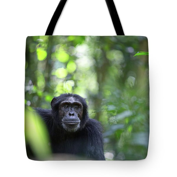 Wild Chimpanzee In The Tropical Rain Forest Of Uganda Tote Bag