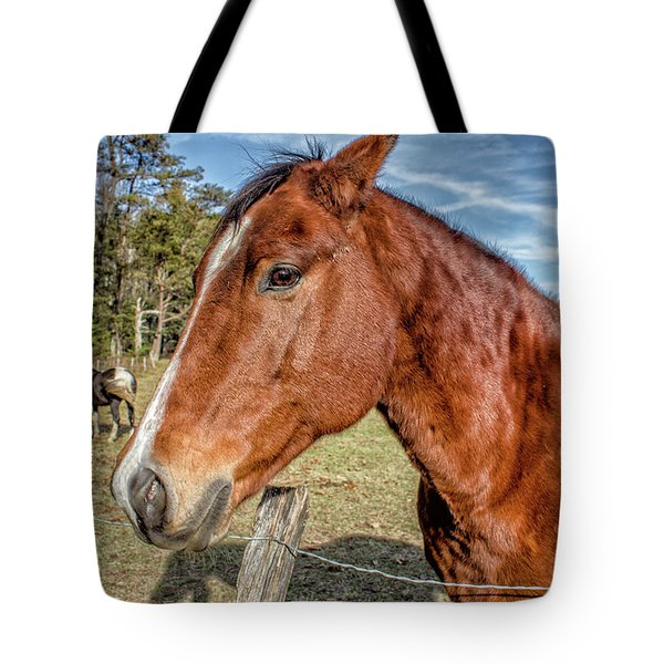 Wild Horse In Smoky Mountain National Park Tote Bag by Peter Ciro