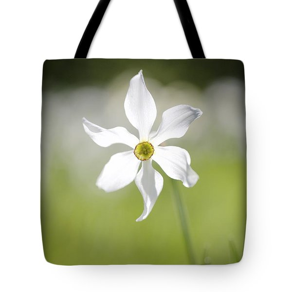 Wild Narcissus Glowing In Sunlight Tote Bag by Colleen Williams