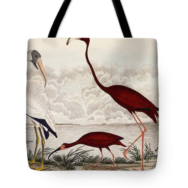 Wood Ibis, Scarlet Flamingo, White Ibis Tote Bag by Alexander Wilson