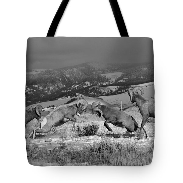 Wyoming Bighorn Brawlers - Black And White Tote Bag