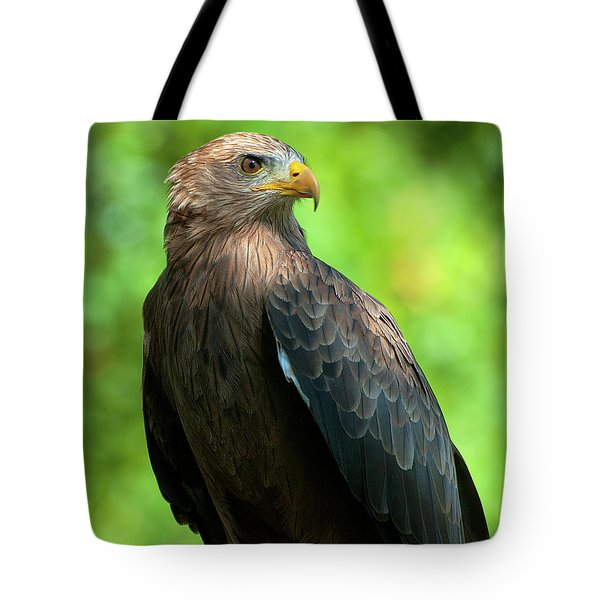 Yellow-billed Kite Tote Bag
