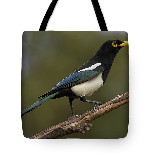 Yellow-billed Magpie Tote Bag