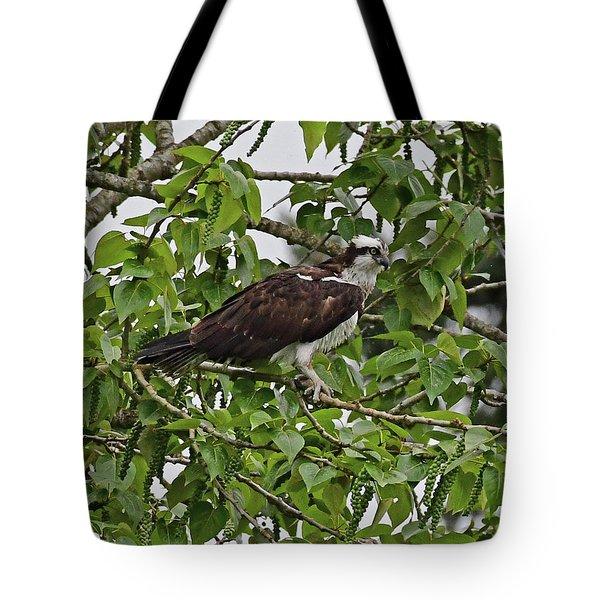Osprey Fishing Tote Bag