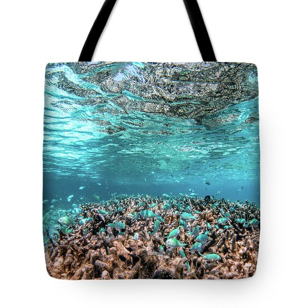 Underwater Coral Reef And Fish In Indian Ocean, Maldives. Tote Bag