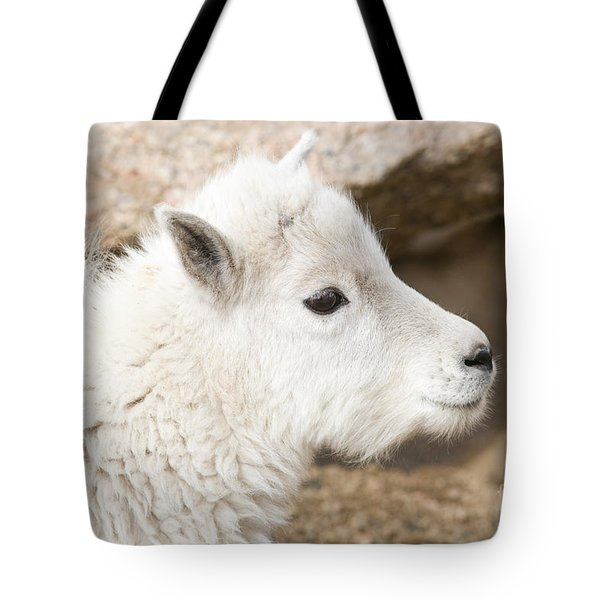 Baby Mountain Goats On Mount Evans Tote Bag