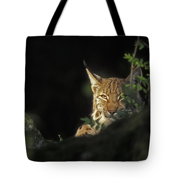 151001p105 Tote Bag