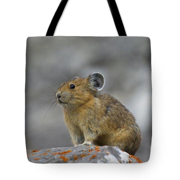 151221p238 Tote Bag
