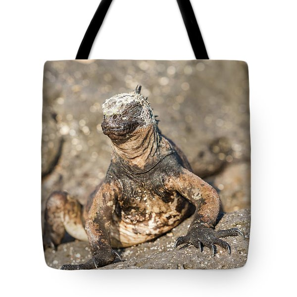 Tote Bag featuring the photograph Marine Iguana On Galapagos Islands by Marek Poplawski