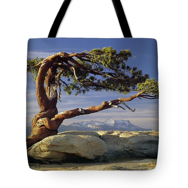 1m6701 Historic Jeffrey Pine Sentinel Dome Yosemite Tote Bag