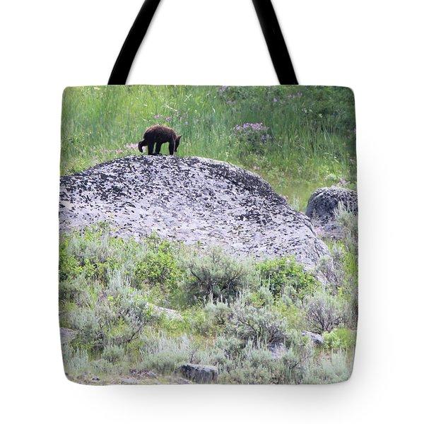 American Black Bear Yellowstone Usa Tote Bag