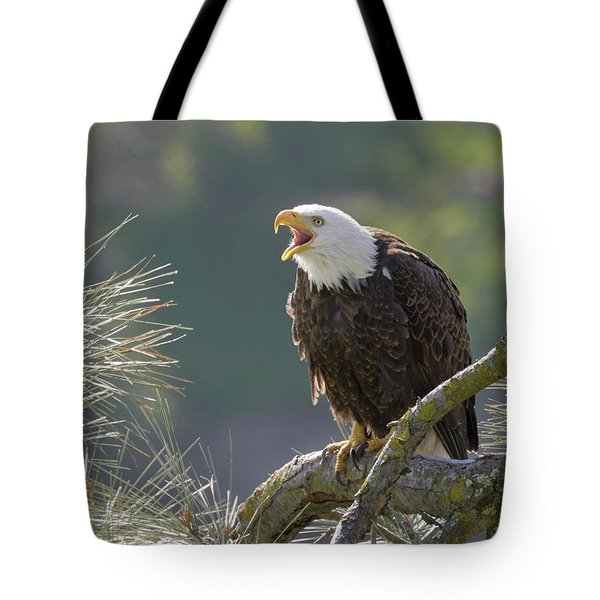 Bald Eagle Tote Bag by Doug Herr