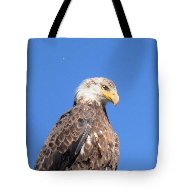 Tote Bag featuring the photograph Bald Eagle Juvenile Perched by Margarethe Binkley
