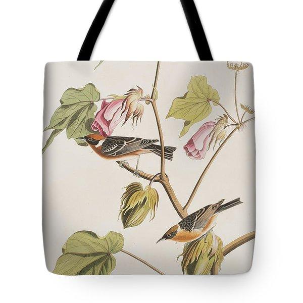 Bay Breasted Warbler Tote Bag by John James Audubon