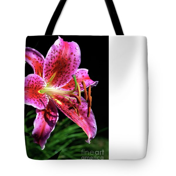 Beaming Tote Bag by Doug Norkum