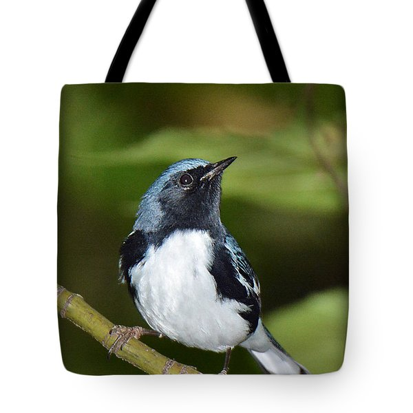 Black-throated Blue Tote Bag