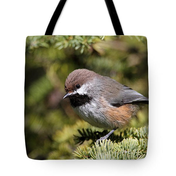 Boreal Chickadee Tote Bag