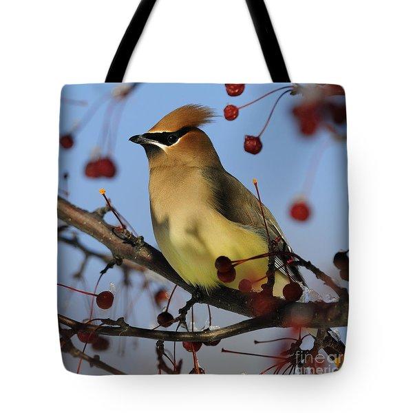 Cedar Waxwing... Tote Bag by Nina Stavlund
