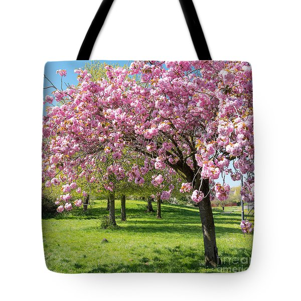 Cherry Blossom Tree Tote Bag by Colin Rayner