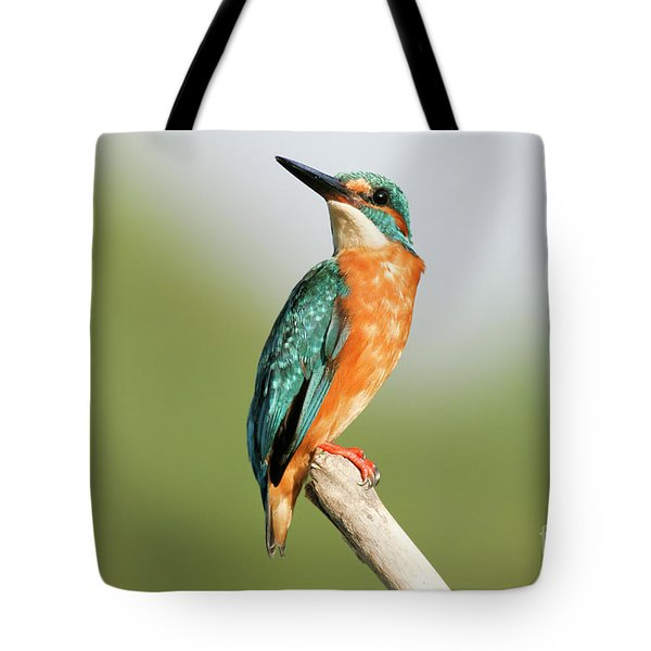 Common Kingfisher Alcedo Atthis Tote Bag