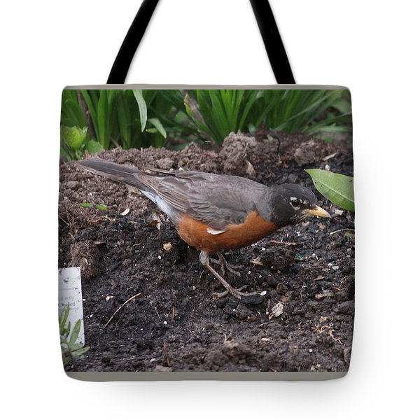 Courtyard Robin Tote Bag