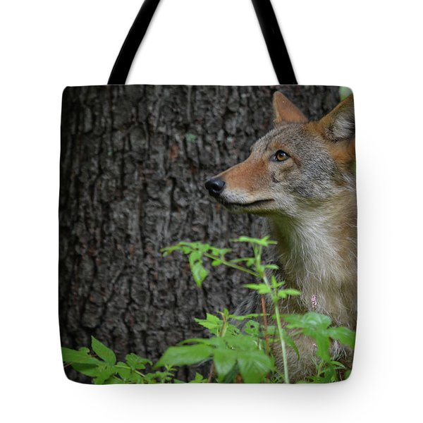Early Morning Coyote In Maine Tote Bag