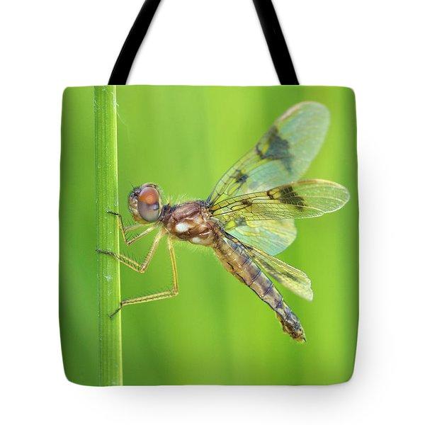 Eastern Amberwing Tote Bag